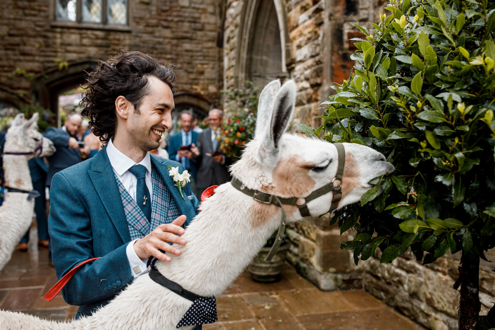 llama at ashdown park hotel wedding