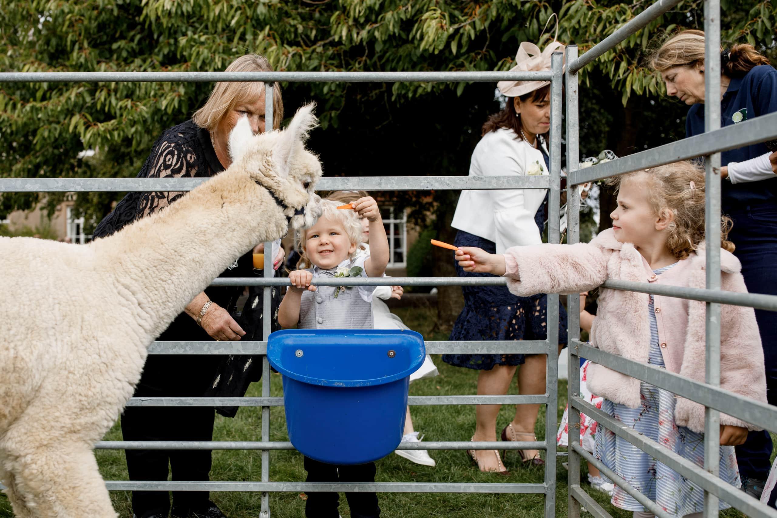 alpaca wedding reception